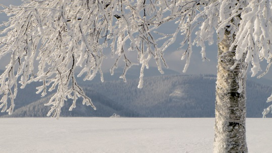 "Eiszeit – Lydia Tschukowskaja ""Untertauchen"""