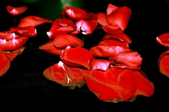 rose-petals-1725764_1280