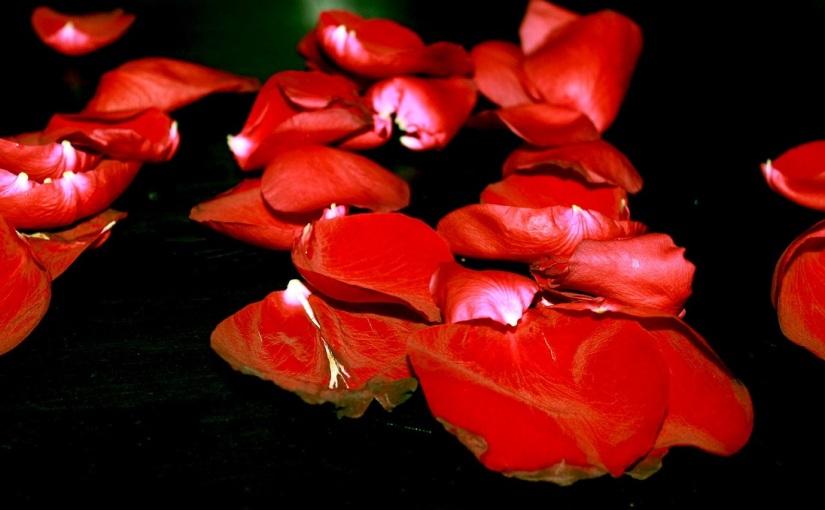 """Schmerz – Nicolas Clément """"Nichts als Blüten undWörter"""""""