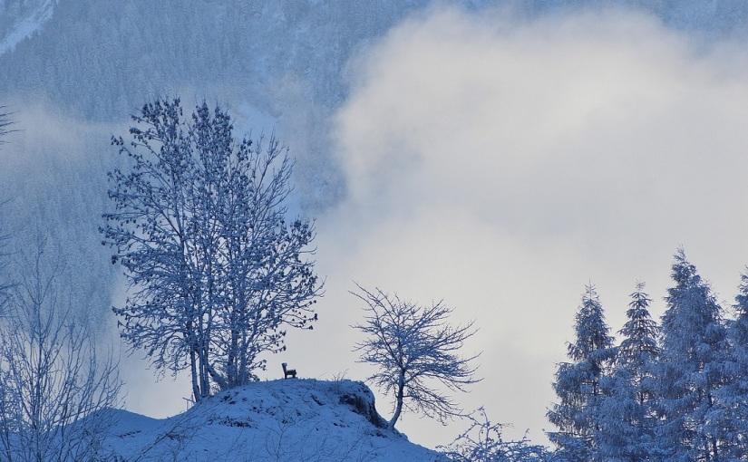 """Fluchtwege – Gerhard Jäger """"Der Schnee, das Feuer, die Schuld und derTod"""""""