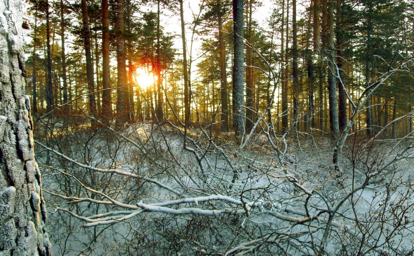"""Entwurzelt – Ada Dorian """"Betrunkene Bäume"""""""