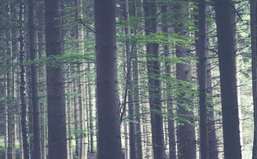 """Am Rand – Isabel Fargo Cole """"Die grüneGrenze"""""""