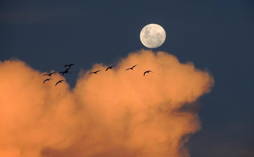 """Cesare Pavese """"Der Mond und dieFeuer"""""""