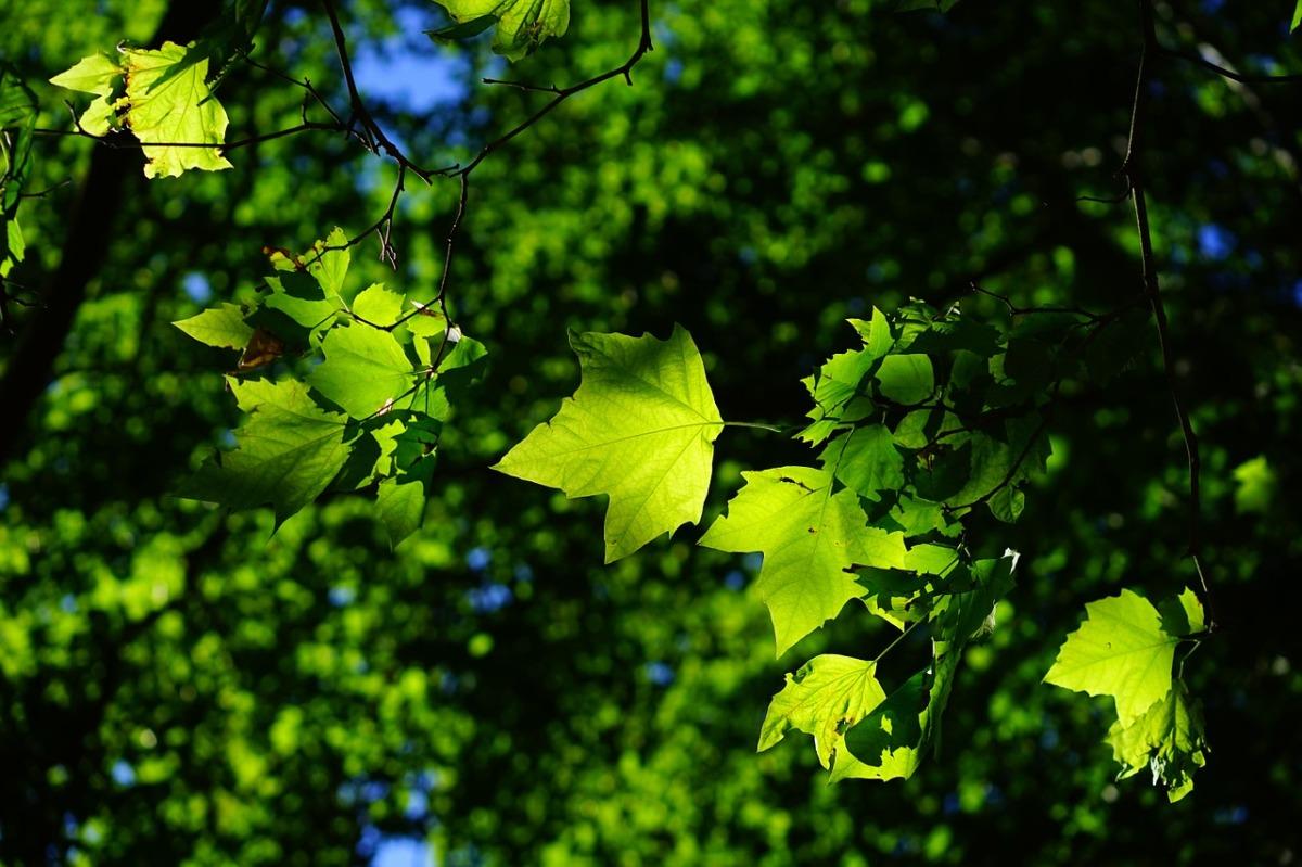 """Jonathan Drori """"In 80 Bäumen um die Welt"""""""